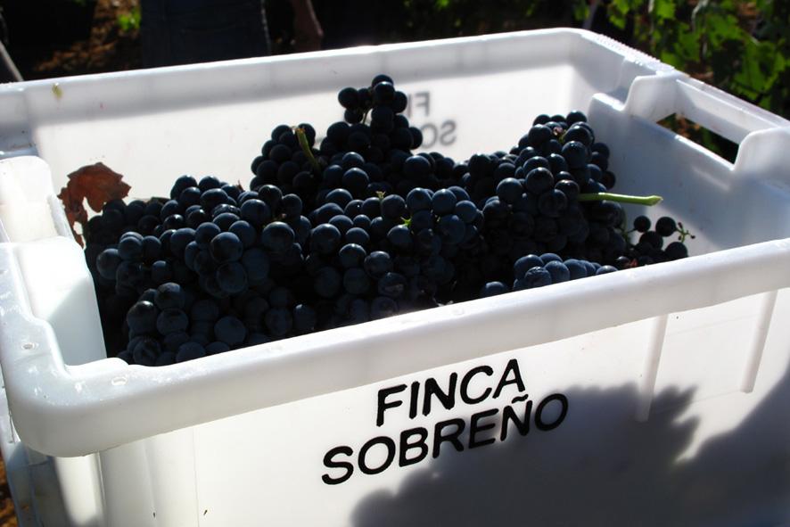 Bodegas Sobreño, vinos, bodegas, gastronomía, enoturismo, empresa.